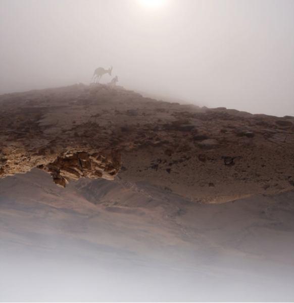 אחרי היעל הנובי (צילום מסך מוזיאון הרצליה)