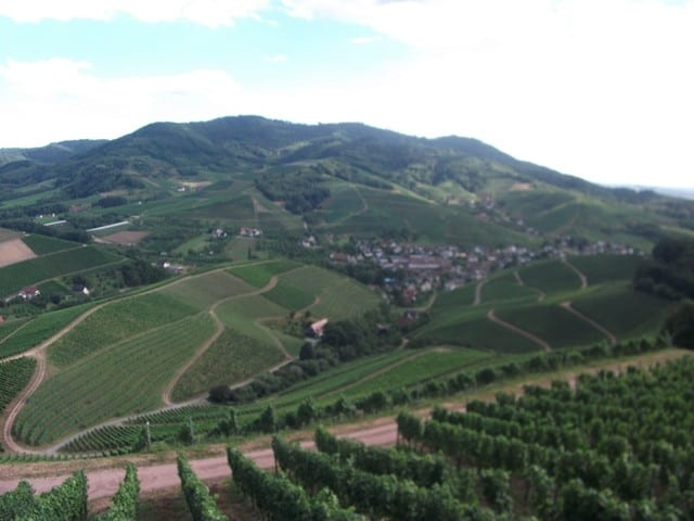 עמק היין של דורבך (צילום דני בר)