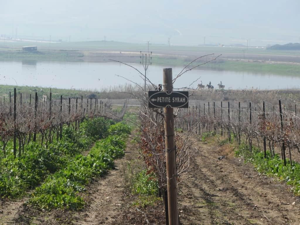 הכרמים ליד יקב שדות (צילום אלון לויטה)