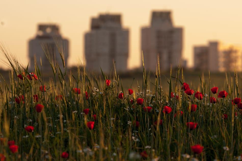 טבע עירוני (צילום אלי בצרי)