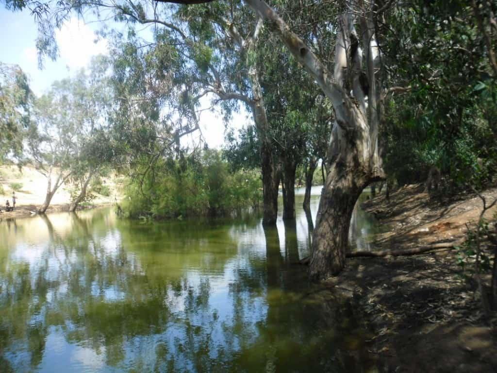 אגם הנקיק בלב חורשת אקליפטוסים - טבע בעיר (צילום דני בר)