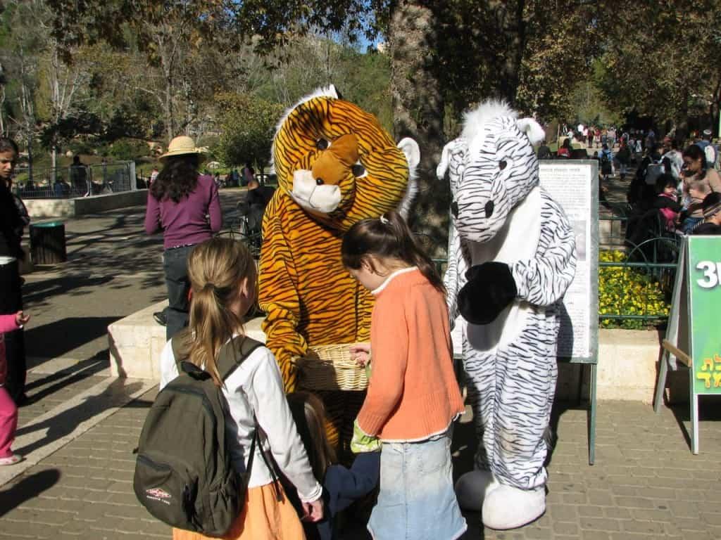 חנוכה בגן החיות התנכי (צילום תמר רביב)