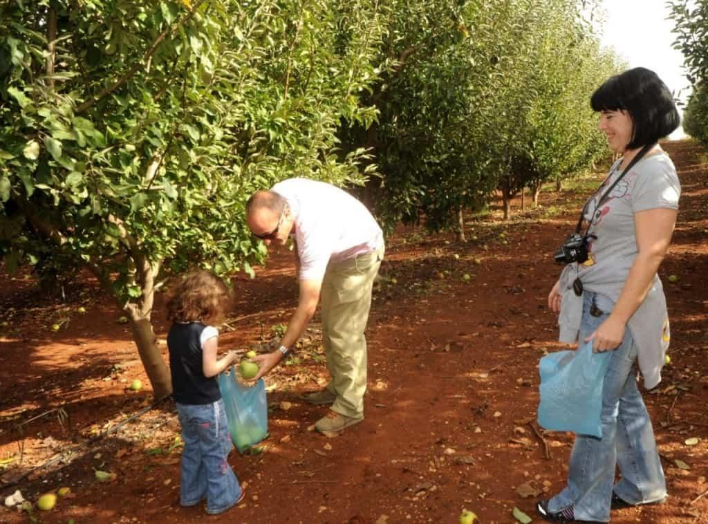 סיור וקטיף תפוחים בבית שלם במטולה (צילום בית שלום)