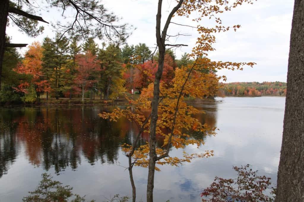 צבעי השלכת בניו-אינגלנד (צילום אראלה פלד)