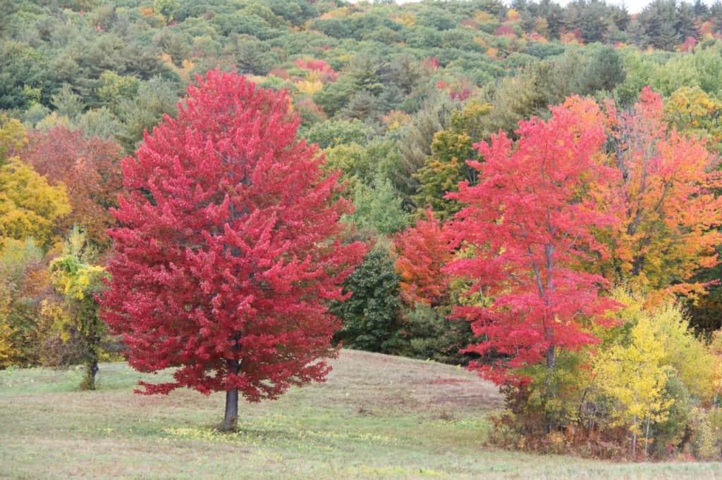 צבעי הסתיו בניו-אינגלנד (צילום אראלה פלד)