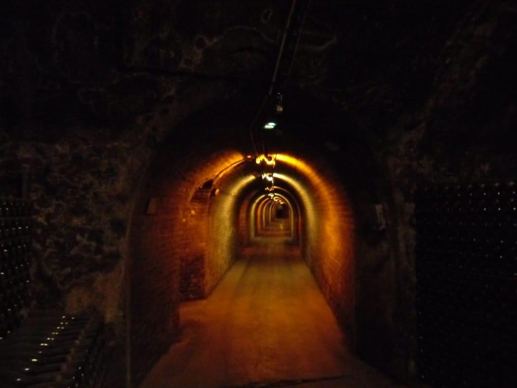 """5 ק""""מ של מרתפי השמפניה בולינג'ר (צילום דני בר)"""