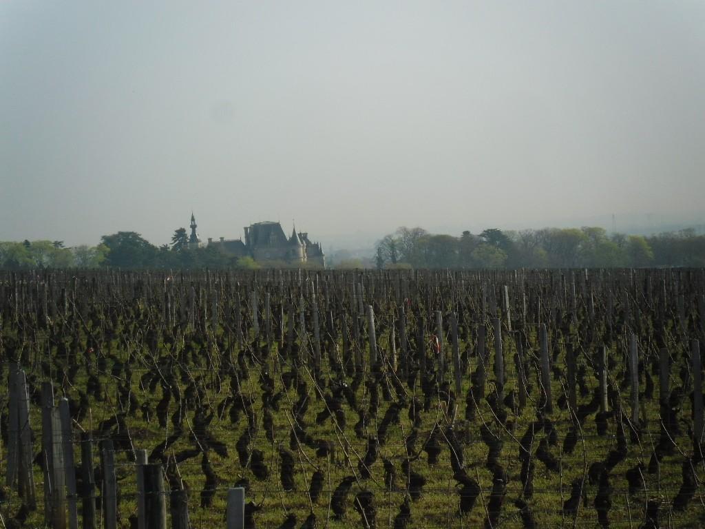 כרמים בדרך היין (צילום דני בר)