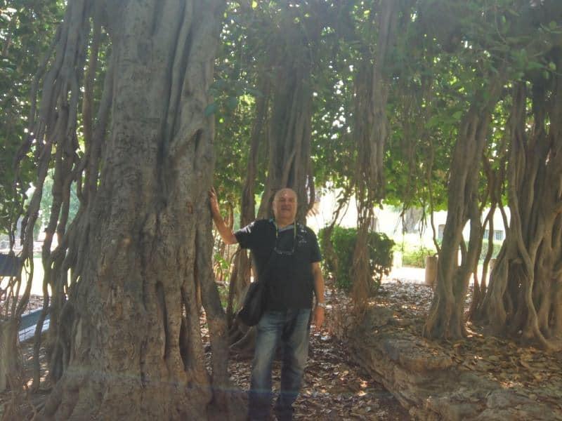 אני העץ המיוחד של מקוה ישראל (צילום דני בר)